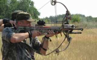 Рейтинг цен на луки, арбалеты и пневматическое оружие