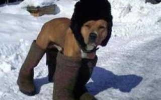 Собака для выживания