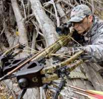 Арбалетно-лучная охота: ищем варианты