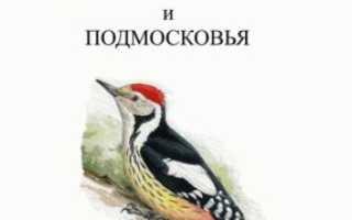 Птицы Москвы и Подмосковья фото с названиями: зимующие, лесные, хищные,  определитель